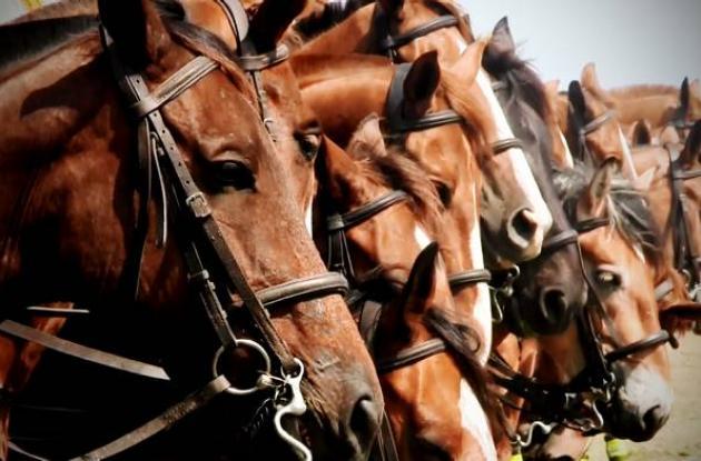Los caballos son los compañeros de los agentes especiales.