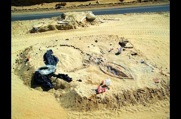 Hallan cementerio de fósiles de ballenas en desierto de Atacama en Chile.