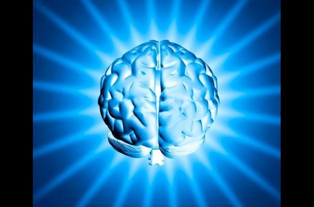 Cerebro humano se ha empequeñecido.