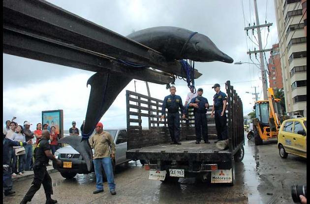 Cetáceo encontrado en playas de Bocagrande