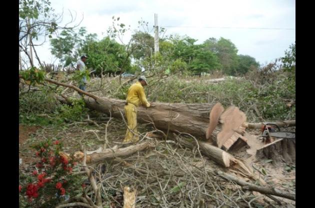 Para pasar la máquina talaron varios árboles.