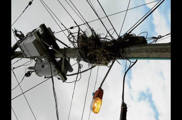Nidos de aves en redes y transformadores causan apagones.