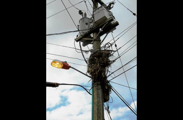 Nidos en redes eléctricas causan constantes cortos.
