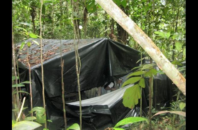 Complejo cocalero en Timbiquí – Cauca.