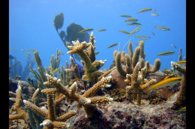 Arrecifes coralinos.