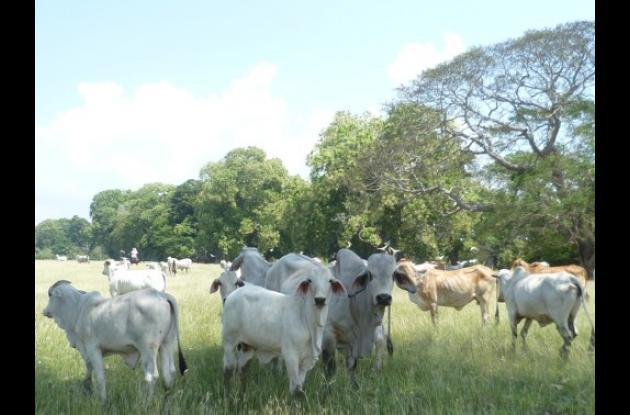 impulso al sector comercial ganadero