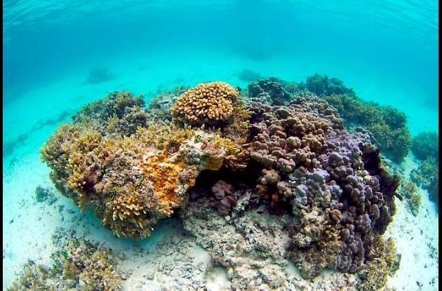 El coral negro puede vivir miles de años