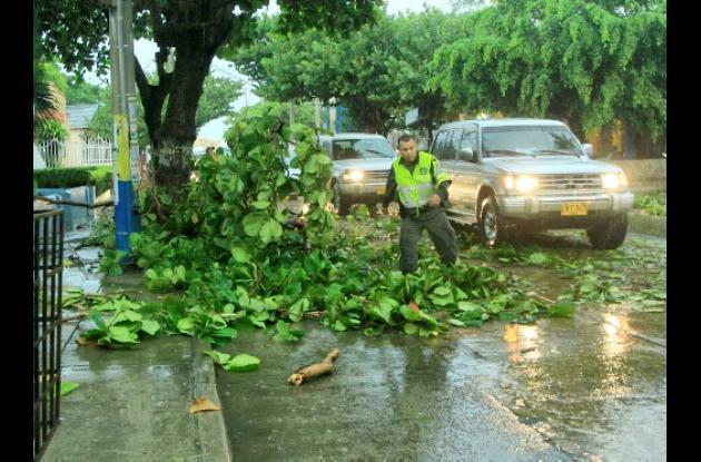 Caída de árboles en Crespo