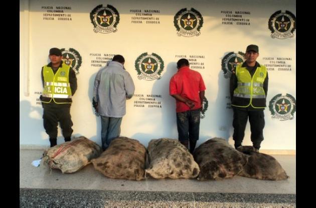 Dos personas fueron capturadas por tráfico de hicoteas.