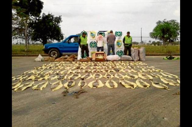 Capturadas varias personas por tráfico ilegal de especies de flora y fauna