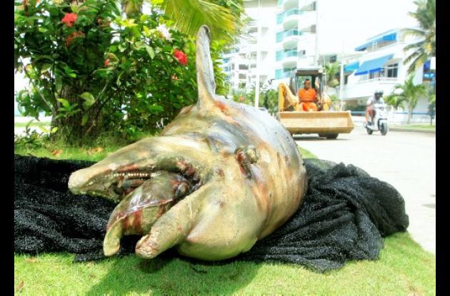 Defín muerto en la Bahía de Cartagena