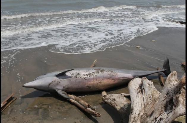 Delfin muerto en Puerto Salgar