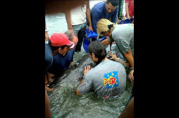 Delfín atrapado en playas de Bocagrande