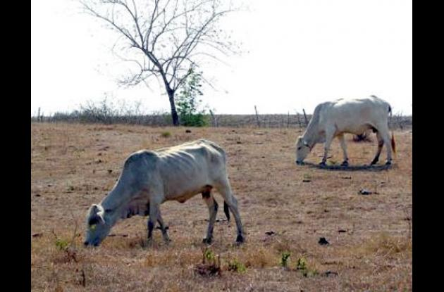 Desertificación ambiental