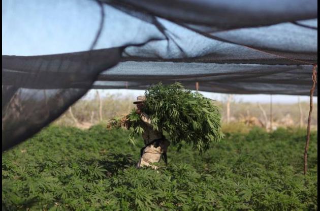 Plantaciones de Droga