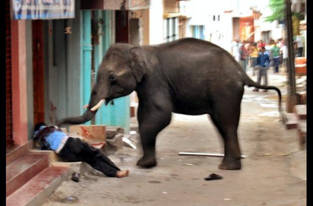 En un callejón el elefante embistió a la víctima en la escalinata de una casa, m