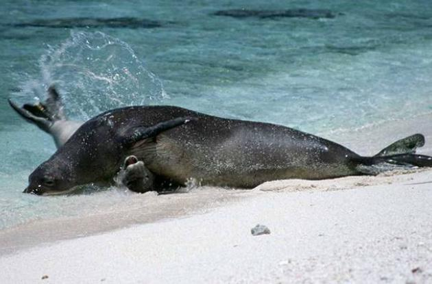 Animales marinos enfermos con enfermedades de animales terrestres.