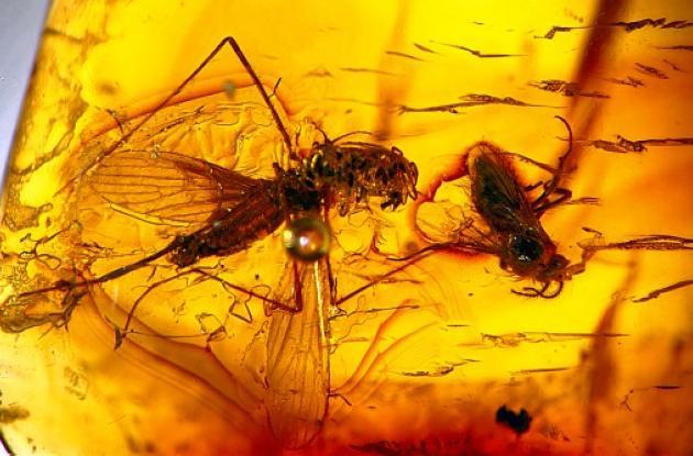 fósiles de insectos