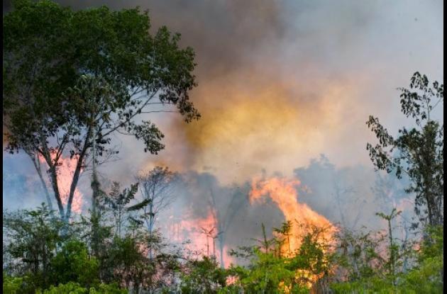 Incendio forestal en Brasil arrasa casi 241.000 hectáreas de unidades de conserv