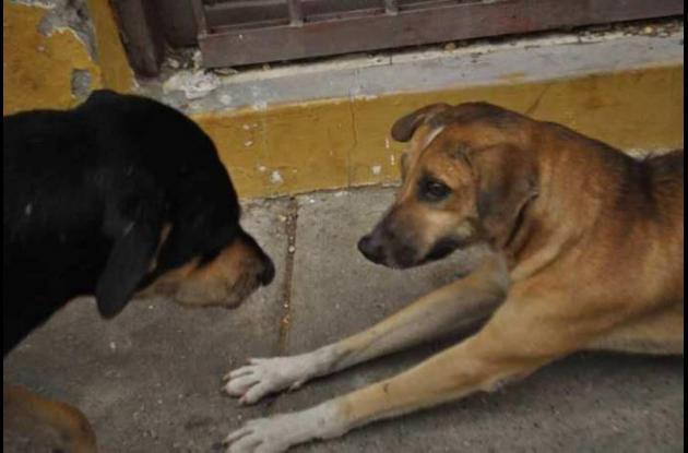 Galán y Bandido, perros sin dueño del Centro Histórico.