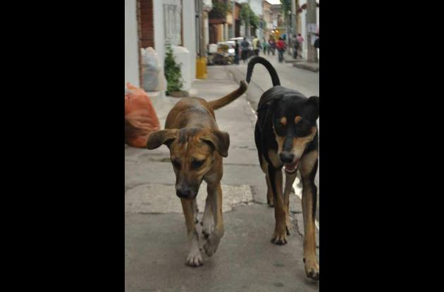 Galán y Bandido, perros sin dueño.