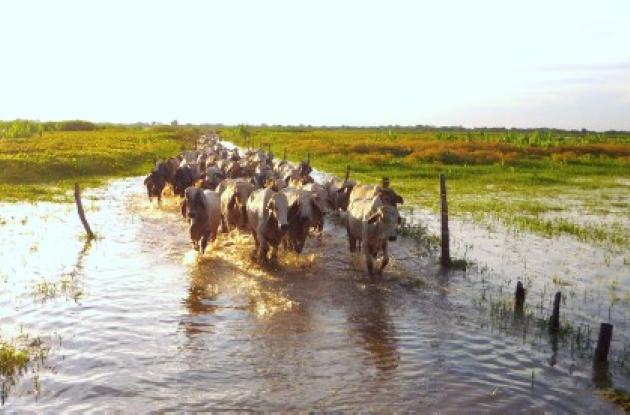 ganaderos afectados por el invierno