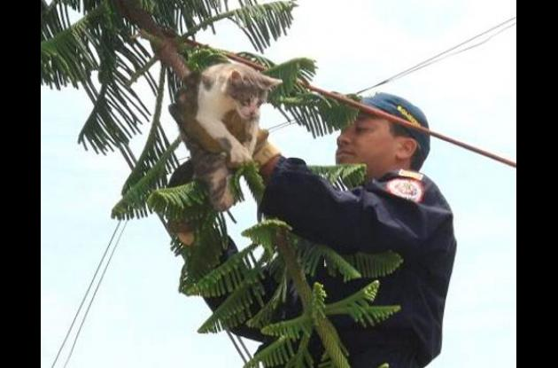 Gato rescatado por bomberos