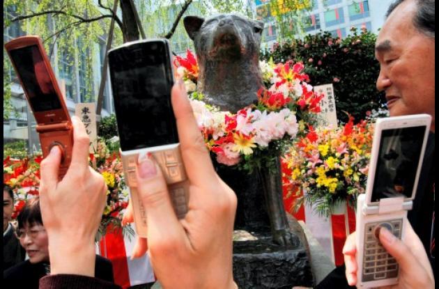 Descubren causa de muerte de perro más famoso del Japón.