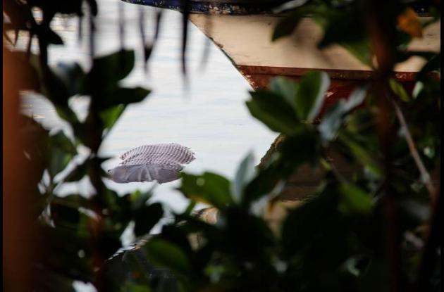 Anciano ahogado en Laguna de San Lázaro