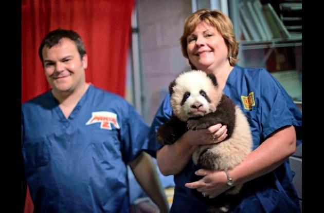 es el único panda gigante que nació en un zoológico de Estados Unidos el año pas