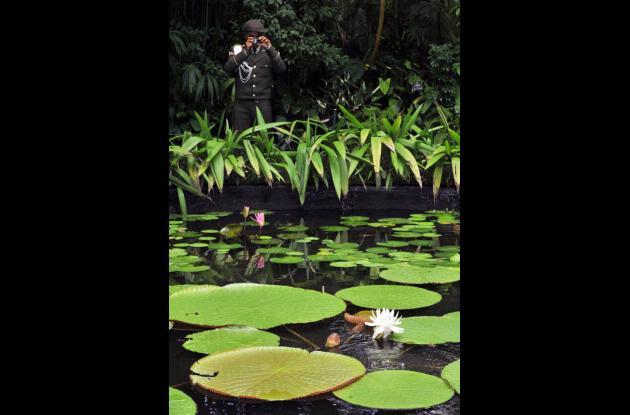 El Jardín Botánico de Bogotá producirá su propia energía mediante el aprovechamiento de residuos vegetales y la instalación de un sistema de energía solar.
