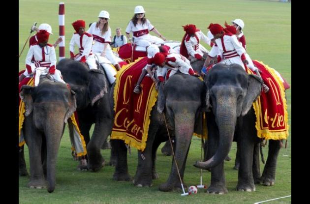 El polo con elefantes es un deporte popular en países como India.
