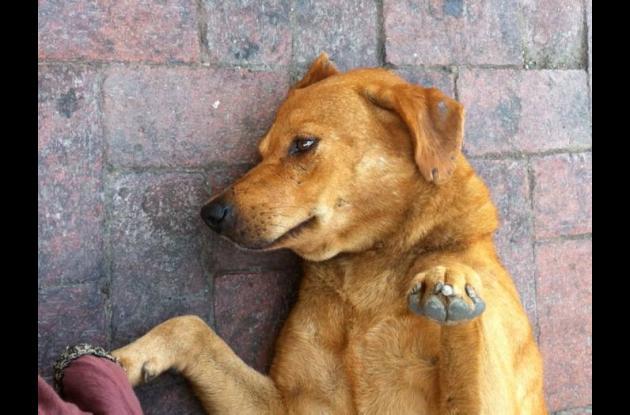 Perro labrador que frecuenta la Torre del Reloj.