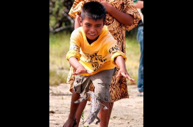 Liberación de caimanes en La Guajira