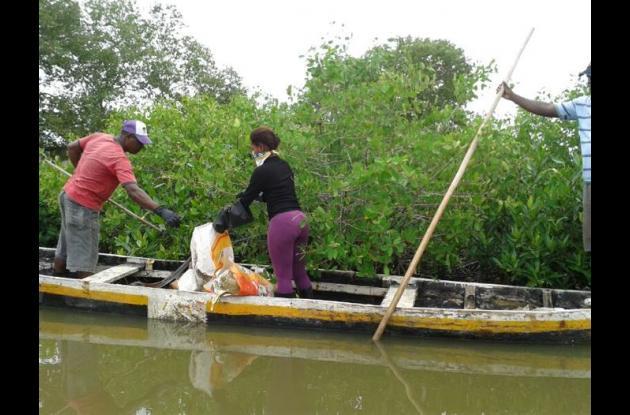 limpieza de manglares