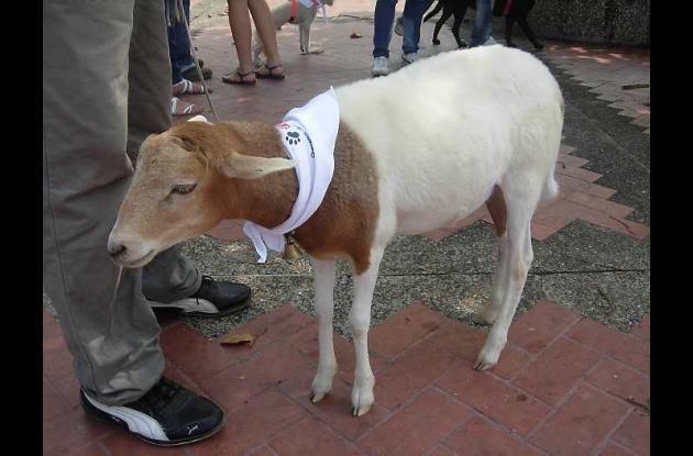 Marcha por los animales de Cartagena.
