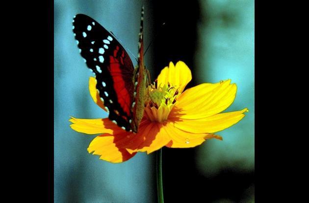mariposa  encima de una flor