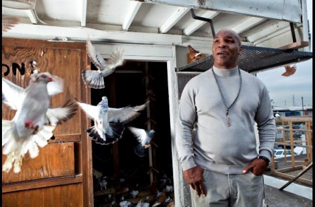Mike Tyson entre palomas.