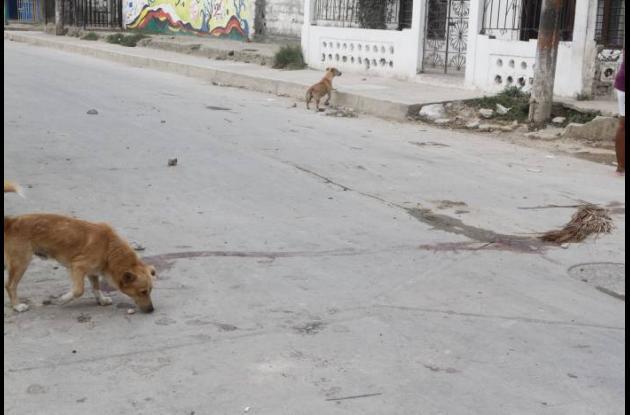 Enfrentamiento entre pandillas deja dos muertos en Olaya Herrera.