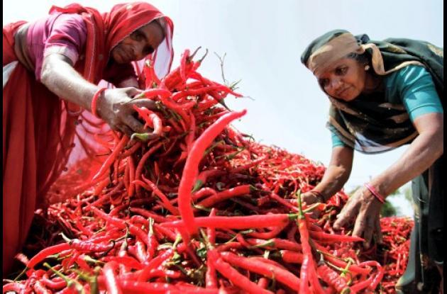 La FAO le da a la mujer papel importante en la agricultura mundial.
