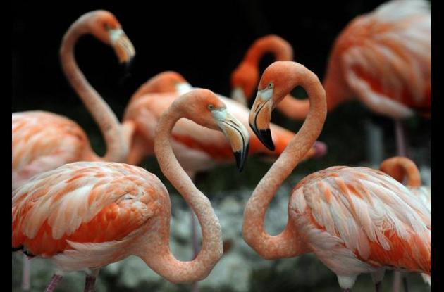 Animales de la Hacienda Nápoles.