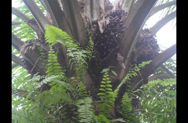 zonas palmicultoras en Bolívar