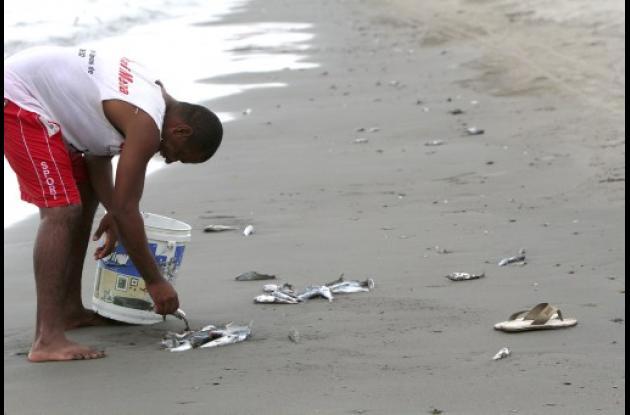 Peces en Manzanillo del Mar