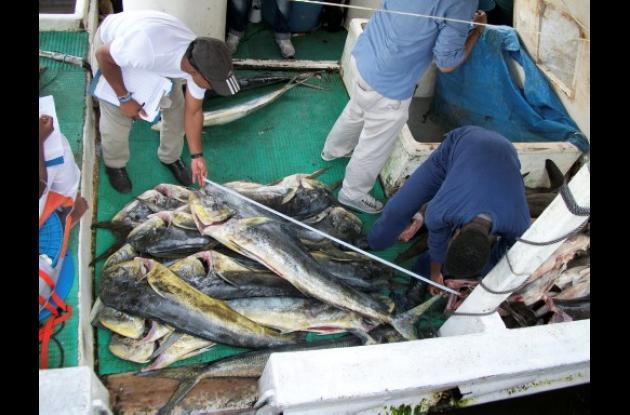 peces de Malpelo