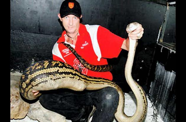 La serpiente pitón la asocian con tratamientos para el corazón.