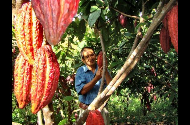 Rafael Amaya, productor de cacao de Aprocasur, en Santa Rosa del Sur.