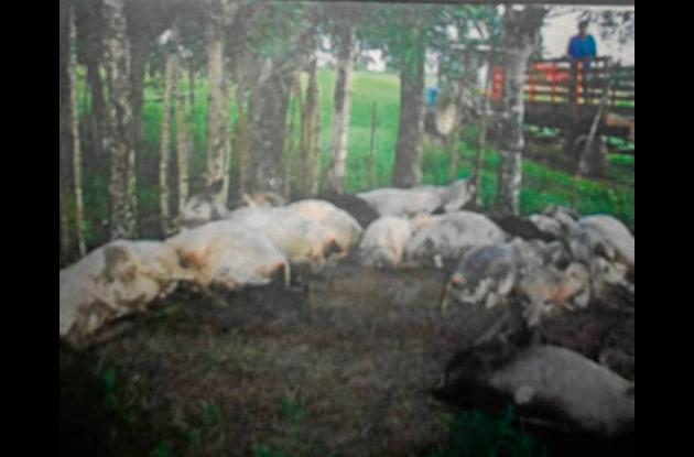 Un rayo mató a 23 animales en una finca del municipio de Tierralta. Córdoba.