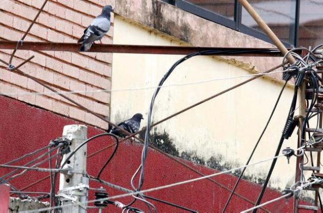 Aves invaden postes de Sucre.