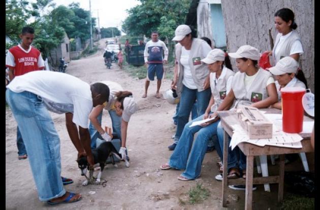 vacunación para cubrir a la población felina y canina.