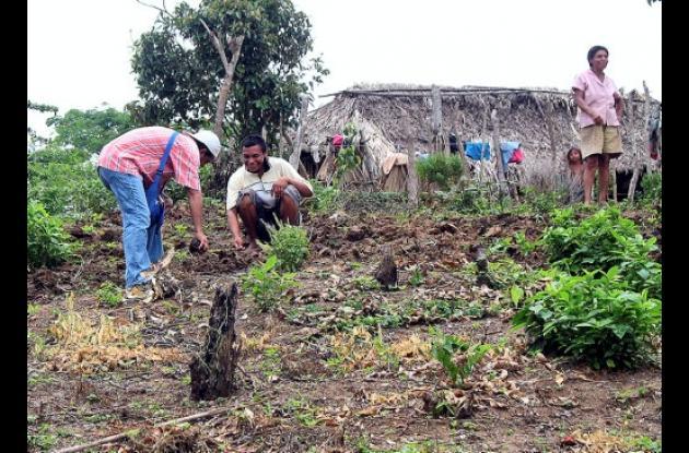 impulso a la seguridad alimentaria en patios productivos